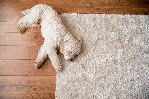 Carpet Cleaning Service Advanced Carpet Cleaning